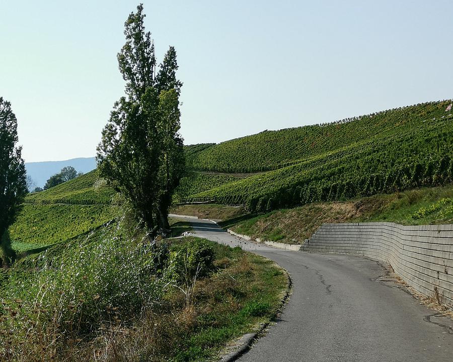 VL_172_Route_du_Vignoble_genevois_Ch_Corniche_Dardagny_14_M.jpg