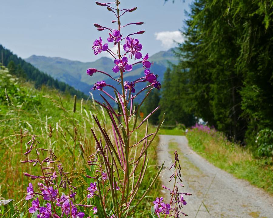 WL_030_04_08_nach_Davos_Dorf_M.jpg