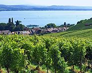 Mont Vully - Vin et gastronomie