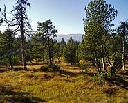 Mire landscapes Salwiden