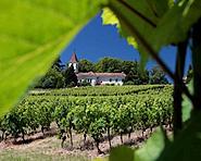 Geneva's vineyards