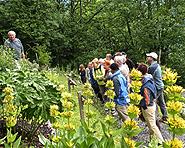 Jardin botanique Gentiana