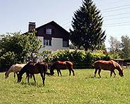 Bauernhof Rosenbergerhof