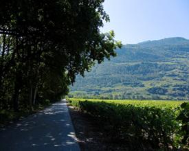 Chemin des berges du Rhône