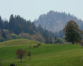 Der Napf - gute Aussicht und viel Wald