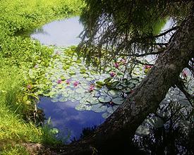 Le Lac des Joncs, Les Paccots