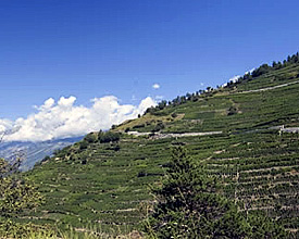 La plus haute vigne d'Europe