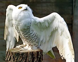 Buchs falconry park