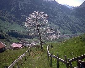 Staldenweg