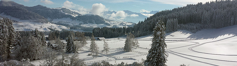 660 Panoramaloipe Wald