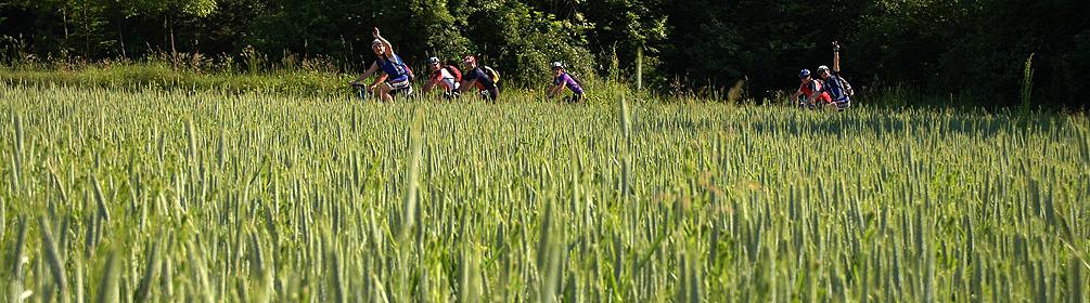 350 Piana del Laveggio Bike