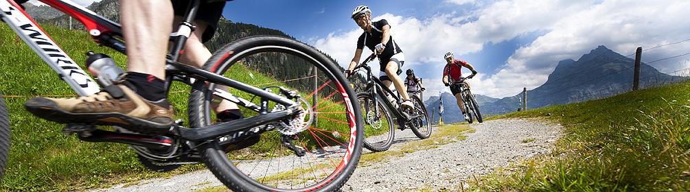 407 Arni Bike