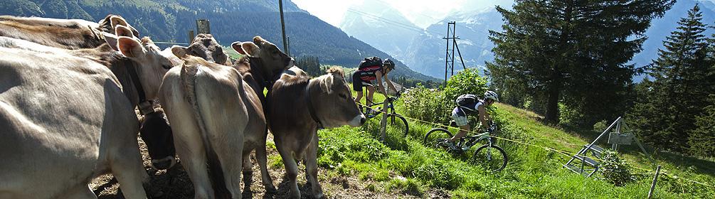 413 Haldi Bike