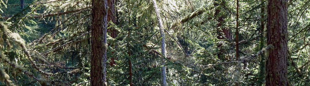 ML 541 Lunggi Trail