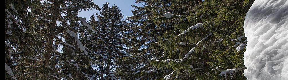 243 Parcours du Mont d'Amin