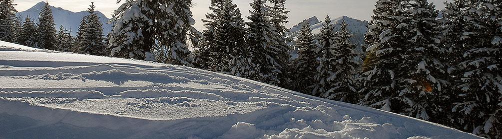 801 Alpoglen Trail