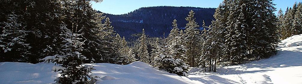 805 Jänzi Trail