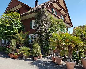Straussenfarm am Sempachersee