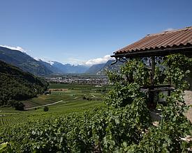Chemin du Vignoble