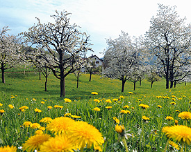 VL_111_Baselbieter_Kirschenblust_im_April
