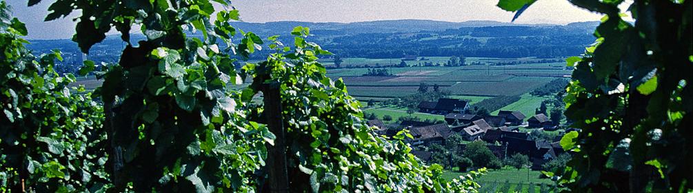 26 Ostschweizer Wein-Route