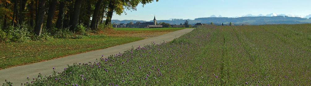 475 Boucle champêtre du Gros de Vaud