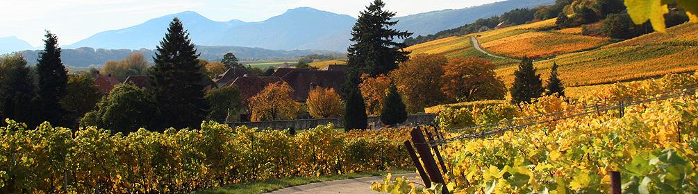 476 Route du Vignoble de Bonvillars