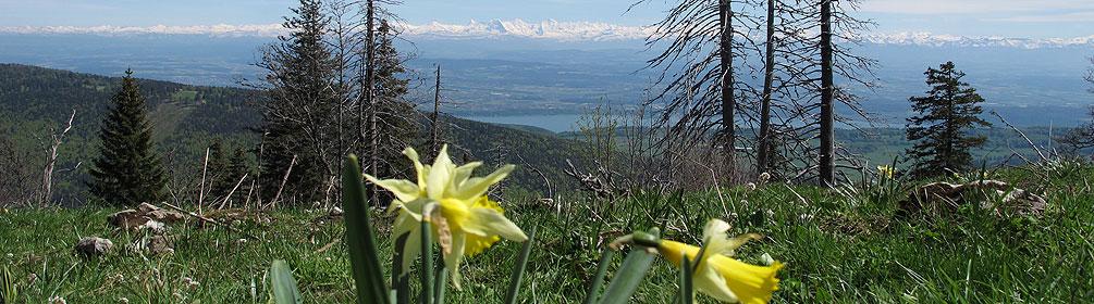 5 Chemin des Crêtes du Jura