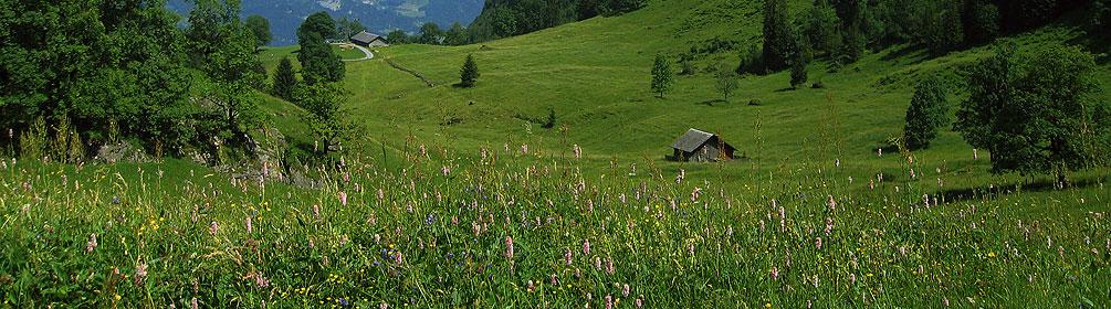 Hochmoor oberhalb Meiringen