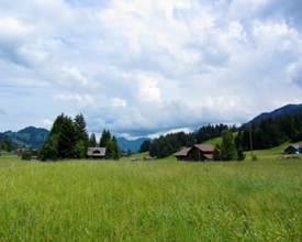 Schönriederweg