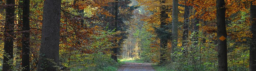 Lorenchopf-Weg