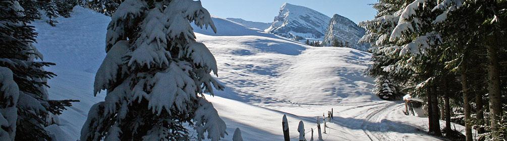 Winterwanderweg Springenboden